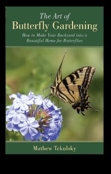 Butterfly-Gardening-2